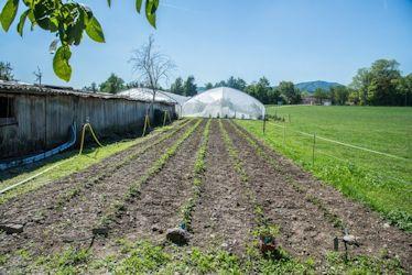 Neu gepflanzte Erdbeeren für 2016